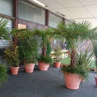 Pflanzen für einen Event in Düsseldorf